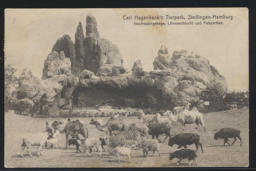 Ansichtskarte Carl Hagenbeck Tierpark Zoo Tiere Kamele Zebra ab Eidelstedt 0