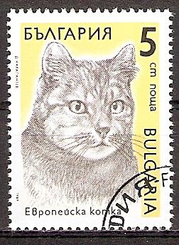 Bulgarien 3808 o Europäische Hauskatze (20151109)