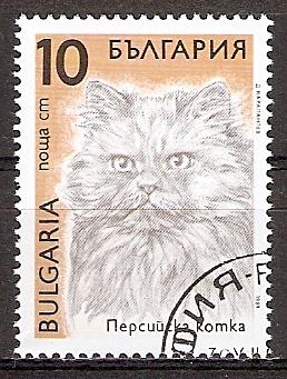 Bulgarien 3811 o Perserkatze (20151111)
