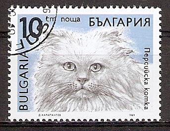 Bulgarien 3812 o Perserkatze (20151107)