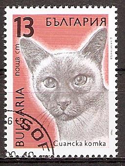 Bulgarien 3813 o Siamkatze (20151108)
