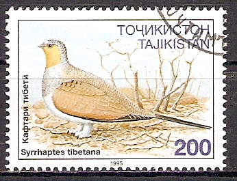 Tadschikistan 80 o Tibetflughuhn (2015471)