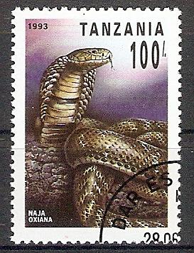 Tansania 1506 o Mittelasiatische Kobra (2018175)