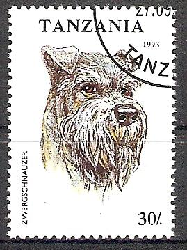 Tansania 1600 o Zwergschnauzer (2017301) 0