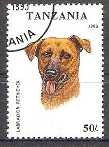 Tansania 1601 o Labrador Retriever (2017302)