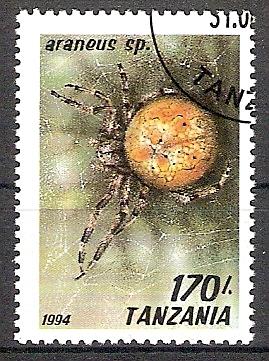 Tansania 1802 o Kreuzspinne (2018173)