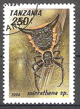Tansania 1803 o Micrathena Spinne (2018174)