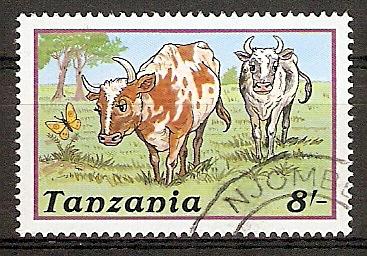 Tansania 483 o Kühe (2015802)