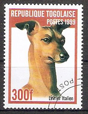 Togo 2826 o Italienischer Windhund (2017308)
