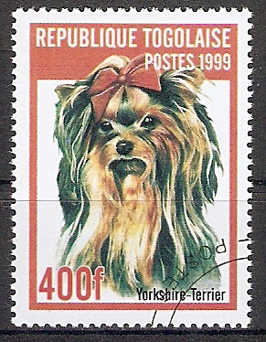 Togo 2827 o Yorkshire-Terrier (2017309)