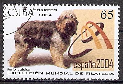 Cuba 4606 o Katalonischer Hirtenhund (201777)