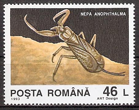Rumänien 4943 ** Wasserskorpion (2015477)