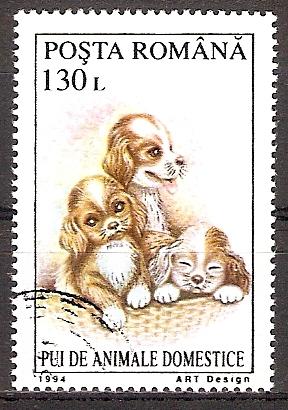 Rumänien 5056 o Hundewelpen (2017241)