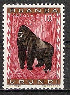 Ruanda-Urundi 161 A ** Gorilla (2015416)