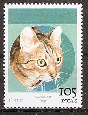Sahara OCC aus 1995 ** Katze (20151101)