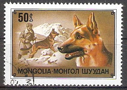 Mongolei 1175 o Schäferhund (2017479)