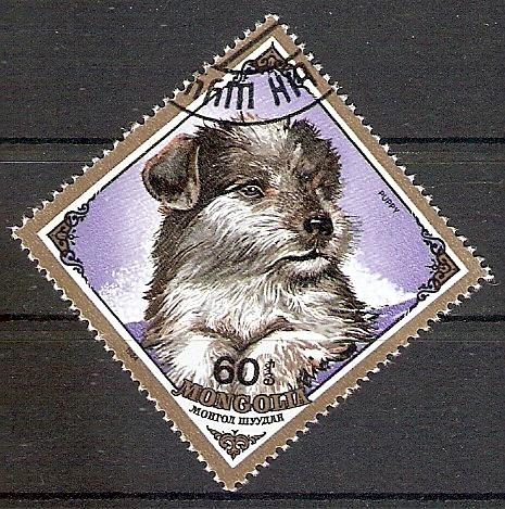 Mongolei 1679 o Junger Hund (2017483)