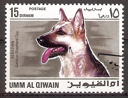 Umm-al-Kaiwain 210 A o Deutscher Schäferhund (2017230)