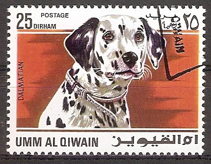 Umm-al-Kaiwain 211 A o Dalmatiner (2017231)