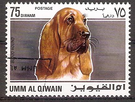 Umm-al-Kaiwain 213 A o Bloodhound / Bluthund (2017233)