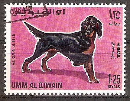 Umm-al-Kaiwain 215 A o Gordon Setter (2017234)