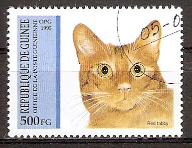 Guinea 1517 o Red Tabby Katze (20151098)