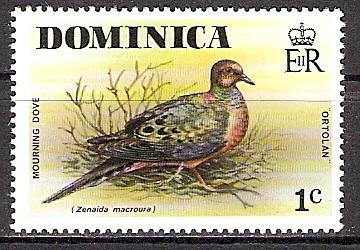 Dominica 482 ** Carolinataube (2015483)