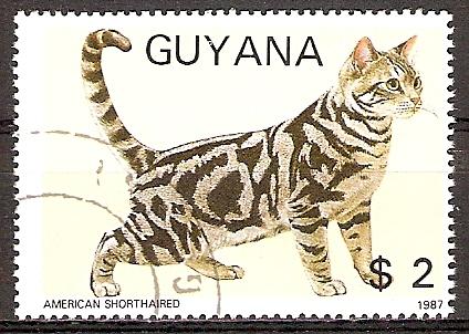 Guyana 2085 o Amerikanische Kurzhaarkatze (20151096)