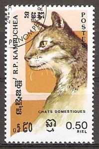 Kambodscha 667 o Schildpatt Katze (20151106)