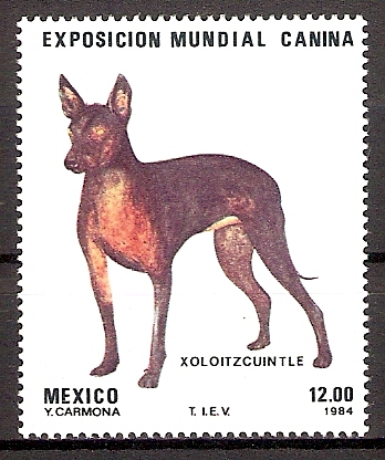 Mexiko 1895 ** Nackthund (2015148)