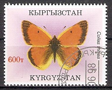 Kirgisistan 136 o Colias thisoa / Gelbling (201749)