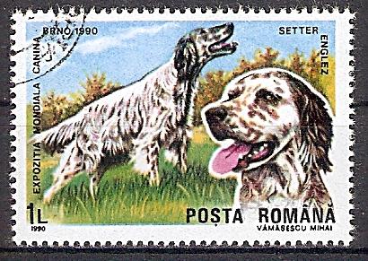 Rumänien 4604 o Englischer Setter (2019149)