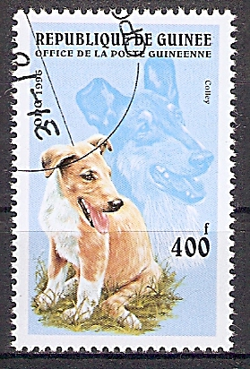 Guinea 1599 o Collie (2019151)