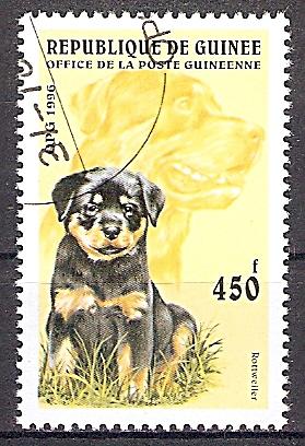 Guinea 1600 o Rottweiler (2019152)