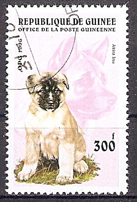 Guinea 1598 o Akita Inu / Japanischer Spitz (2019153)