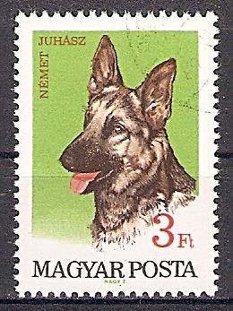 Ungarn 2342 A o Deutscher Schäferhund (2019154)