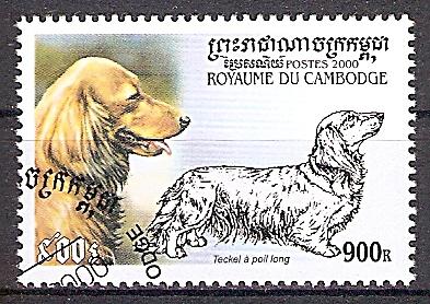 Kambodscha 2111 o Langhaariger Zwergdackel (2019156)