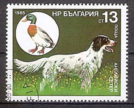 Bulgarien 3431 o Englischer Setter - Stockente (2019161)