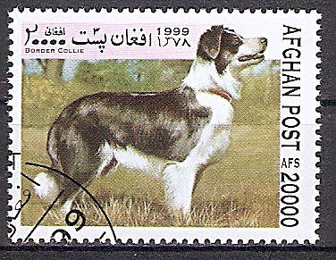 Afghanistan 1857 o Border Collie (2019166)