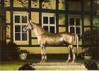 AK Verden - Tempelhüter Denkmal / Pferd (417)