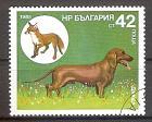 Briefmarke Bulgarien Mi.Nr. 3435 o Jagdhunde 1985 Motiv: Hunde - Kurzhaardackel, Fuchs (#10087)