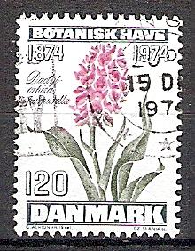 Briefmarke Dänemark Mi.Nr. 576 o 100 Jahre Botanischer Garten der Kopenhagener Universität 1974 Motiv: Blumen - Purpur Knabenkraut (Dactylorhiza purpurella) (#10096)