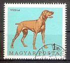 Briefmarke Ungarn Mi.Nr. 2339 A o Hunde 1967 Motiv: Hunde - Kurzhaariger Ungarischer Vorstehhund (Rövidszőrű magyar vizsla) (#10156)