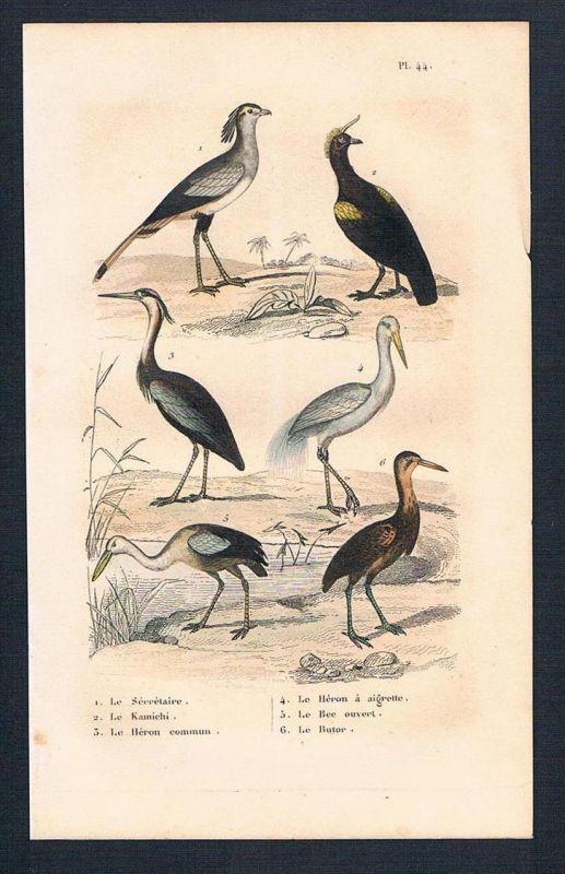 Sekretär Reiher Vögel Vogel birds antique print engraving Stahlstich
