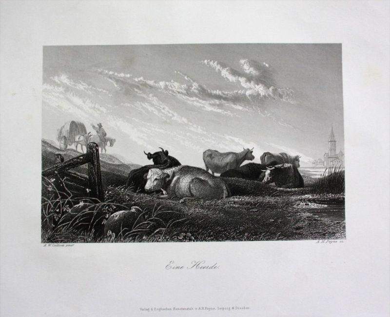 Kühe Kuh Rinder Weide cow cows Bauer Feldarbeit engraving Stahlstich