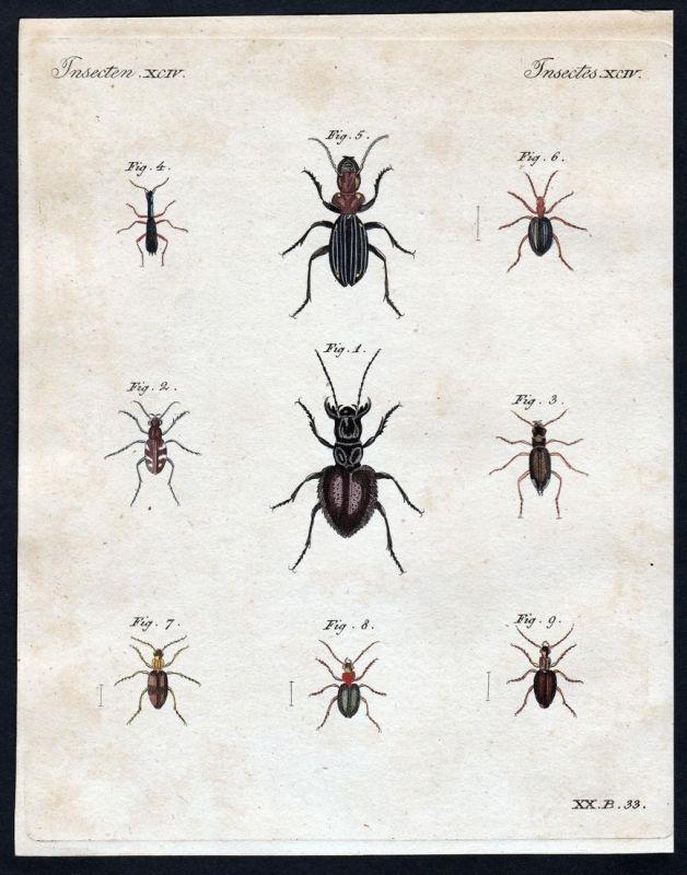 Insecten XCIV - Käfer beetle bug Insekten insects Kupferstich Bertuch antique print Kneipkäfer Wald-Cicindele