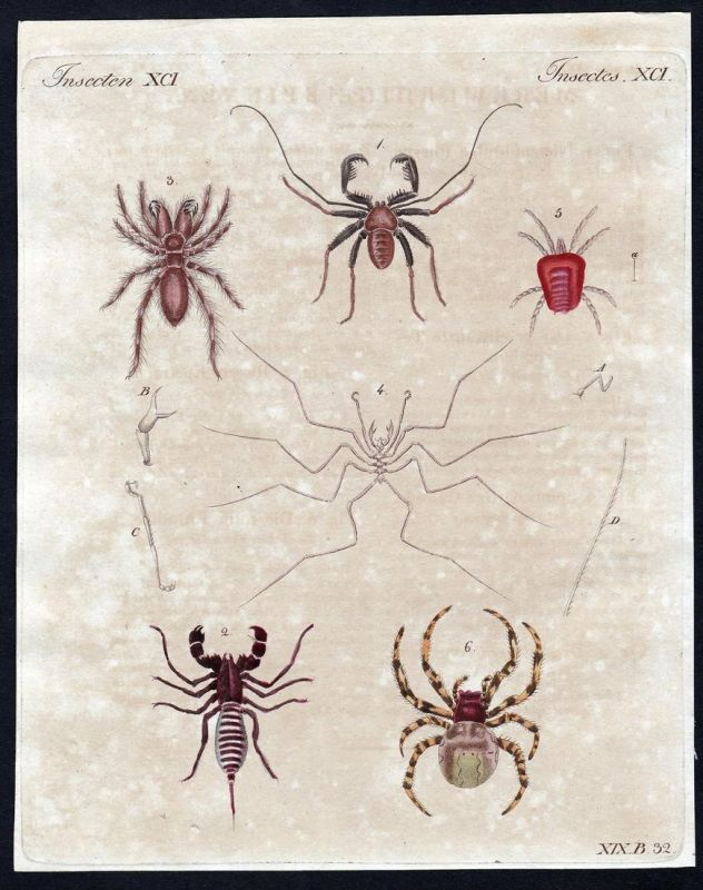 Insecten XCI - Spinne spider Spinnen spiders Milbe mite Insekten insects Kupferstich Bertuch antique print Phr