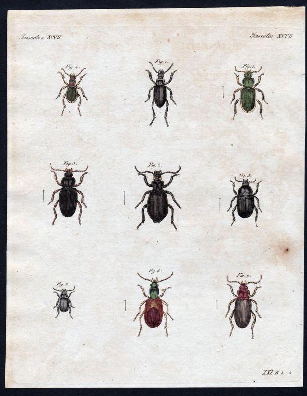 Insecten XCVII - Käfer bug beetle Insekten insects Kupferstich Bertuch antique print Sphodrus Dolichus Taphria