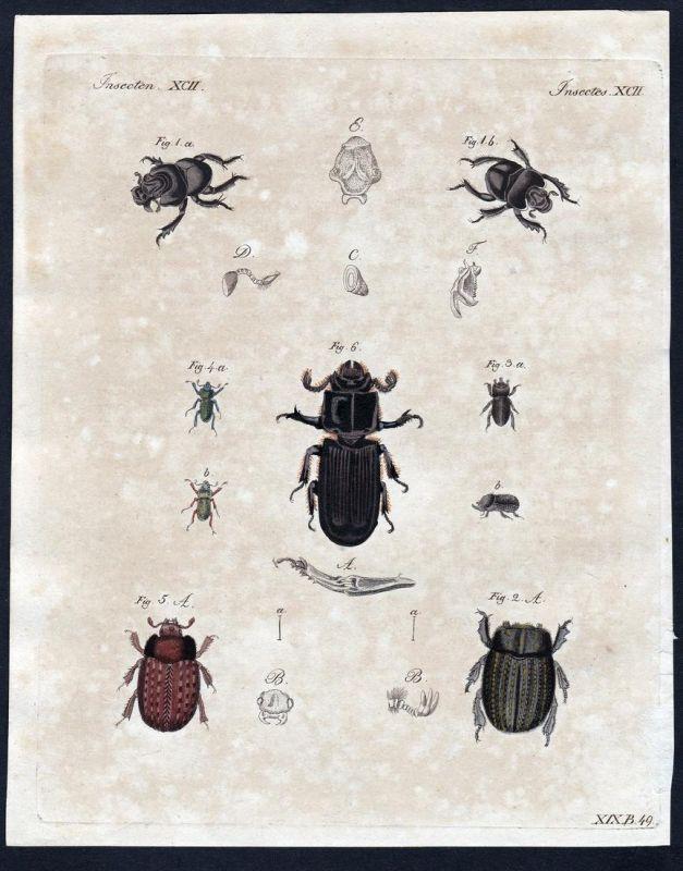 Insecten XCII - bug Käfer beetle Insekten insects Kupferstich Bertuch antique print Zwiebelhornkäfer Gries-Erd