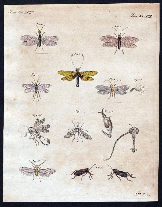 Insecten XCIX - Fliege fly Fligen flys Insekten insects Kupferstich Bertuch antique print Kamehlfliege Schlamm